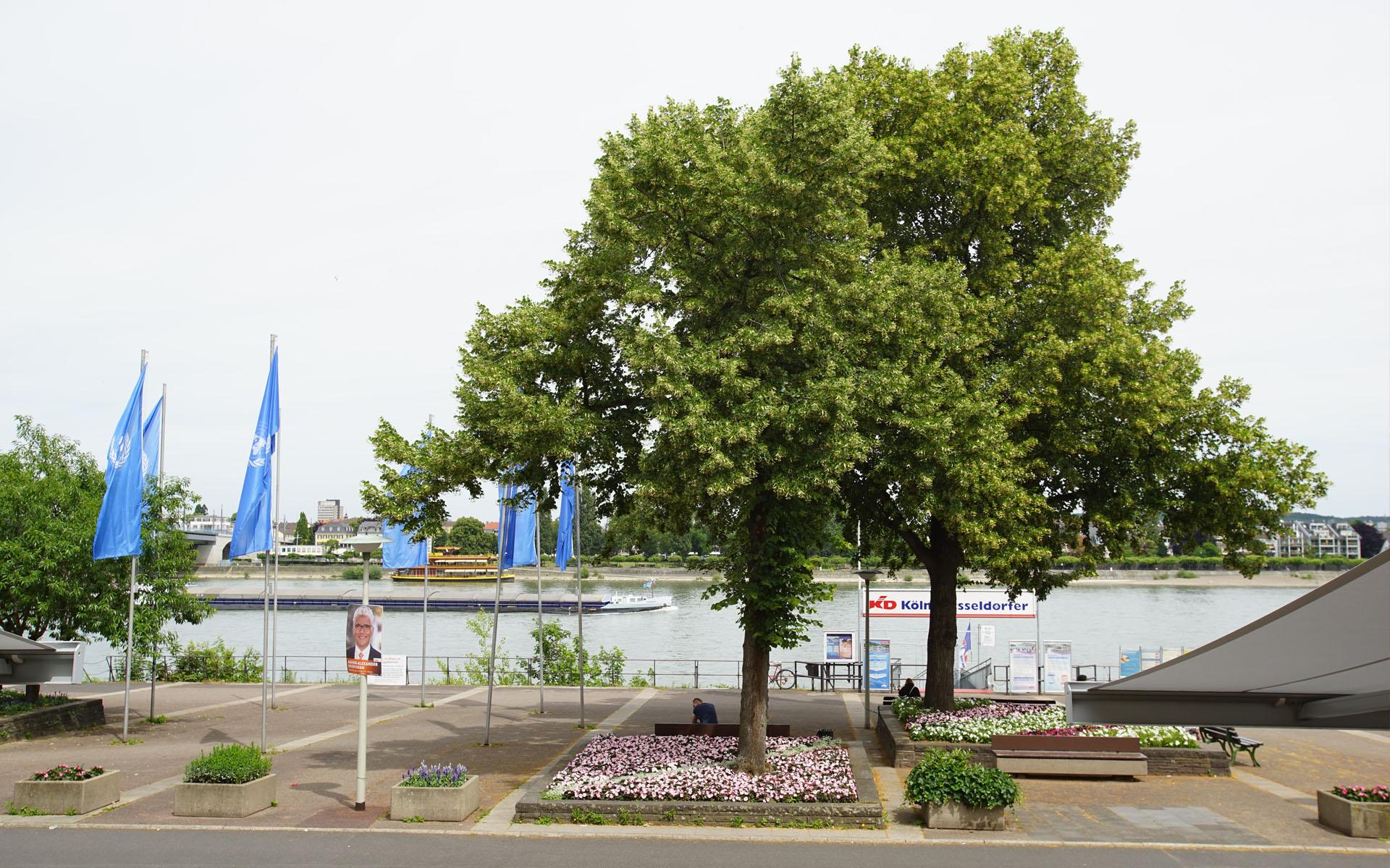 Rheinlogen-Eigentumswohnung-13